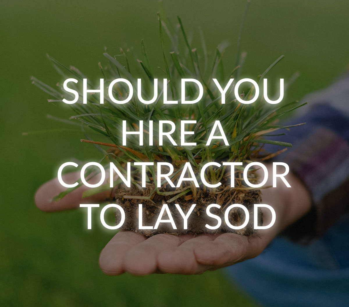 sod laying in windsor on